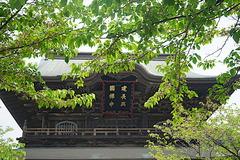 190422建長寺新緑