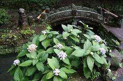 150910浄智寺タマアジサイ