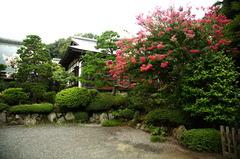 150830浄妙寺サルスベリ