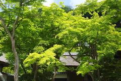 170528円覚寺新緑2
