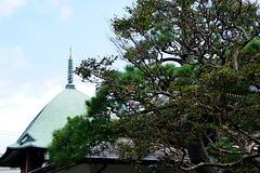 190812本覚寺サルスベリ