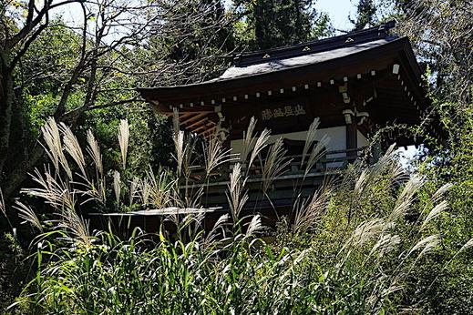 181002浄智寺ススキ
