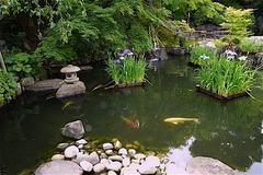 160606長谷寺放生池