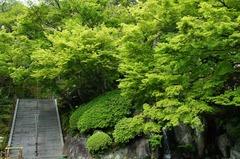 120425長谷寺新緑