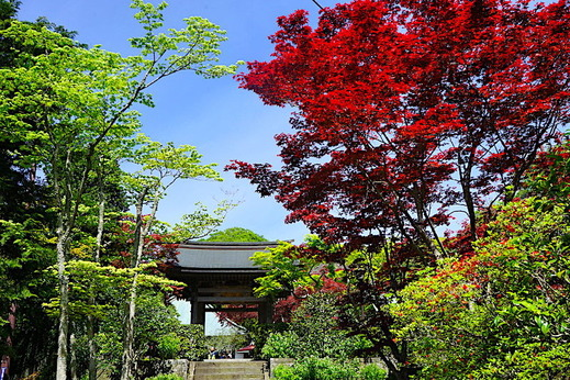 190428海蔵寺1