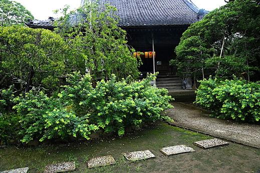 200730宝戒寺ハギ