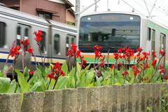 090711横須賀沿線カンナ