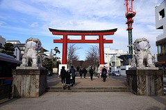 201226�岡八幡宮こま犬2