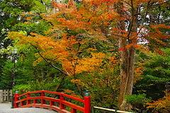 201202�岡八幡宮紅葉