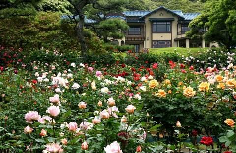 090517鎌倉文学館バラ2
