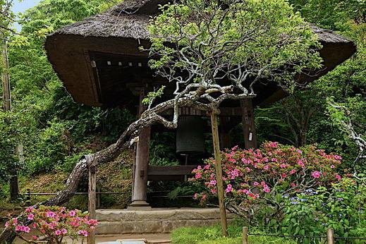 190528東慶寺サツキ