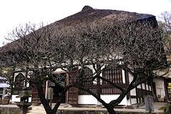 200115円覚寺ウメ2