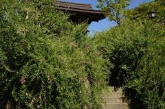 120911海蔵寺ハギ1