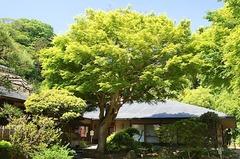 150510浄智寺新緑