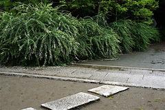 160914宝戒寺ハギ1