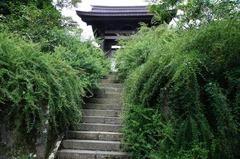 110906海蔵寺 hagi