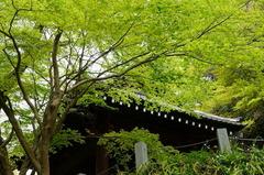 160408妙本寺新緑
