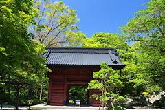 170511妙本寺新緑1