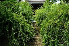 180906海蔵寺ハギ