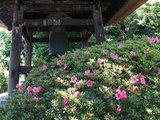 070523東慶寺サツキ