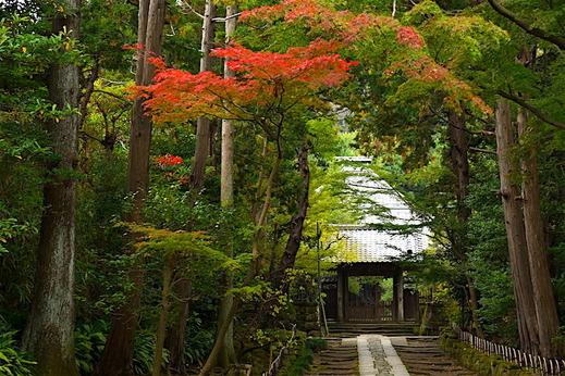 161114寿福寺紅葉