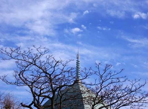 100123本覚寺センダンと青空