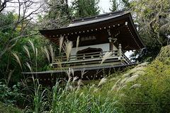 161016浄智寺ススキ