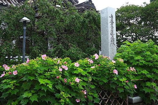200730妙隆寺フヨウ