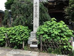 180707妙隆寺フヨウ1