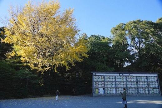 141203八幡宮黄葉