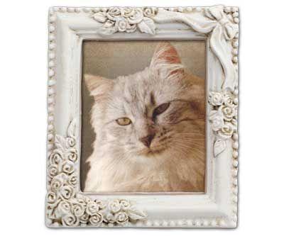 ペットロス猫のミニ額遺影