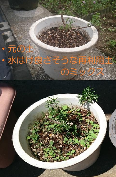①元土+再利用土