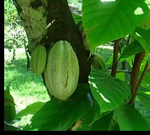 kakao001
