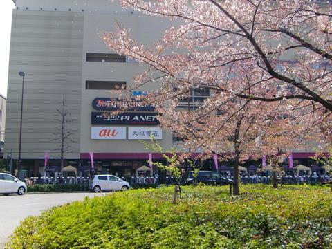 0409桜(花びら散る)と全体01
