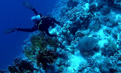 diving-1799617_960_720