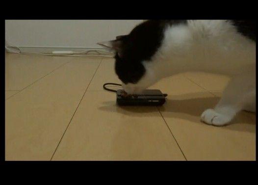 猫のご飯シーンを近くで撮ろうとした結果こうなった