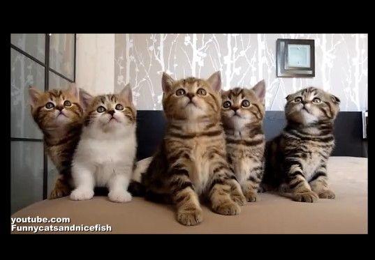 シンクロする5匹の子猫の反応がかわいい