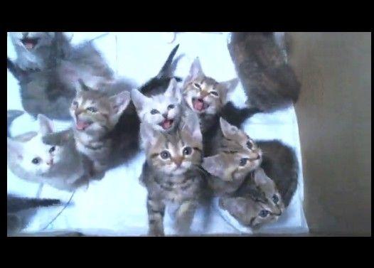 ご飯待ちの子猫の大合唱