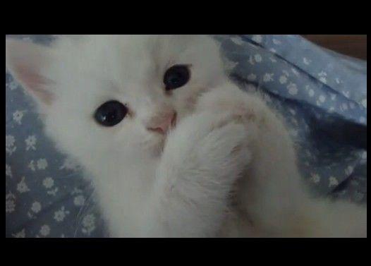 とある子猫ちゃんの可愛さ
