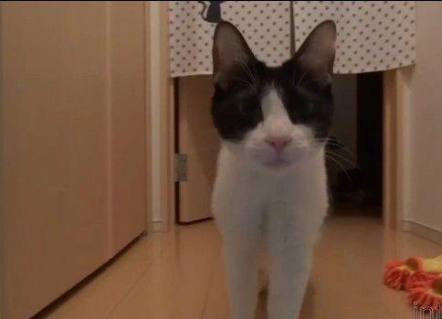 会いたくて会いたくて声が震える猫 - 2秒でにゃんこ♪セレクション