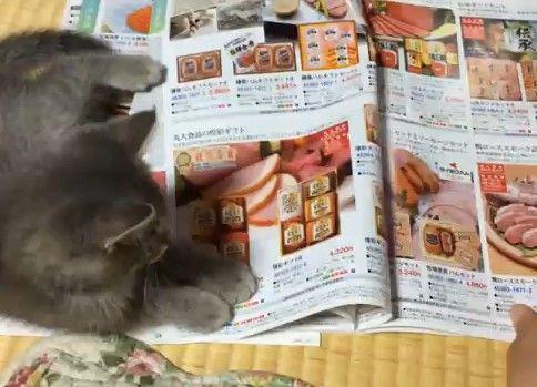 子猫がお中元ギフトを選ばせてくれません