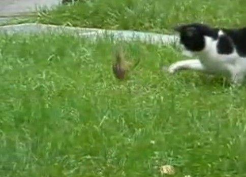 猫を幻惑させる忍者リス