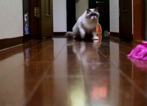とつぜんのライバル出現に緊張しながらも反撃する猫