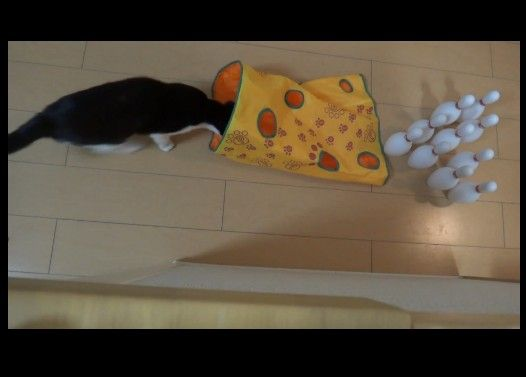 猫でボウリング