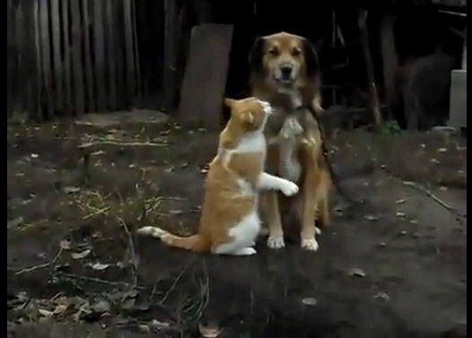 仲良く寄り添う犬猫カップル