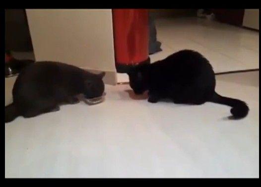 猫のコント お題「トムとトム」