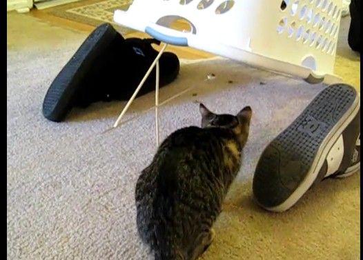 全自動ネコ捕獲装置
