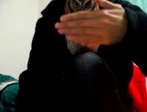 ポンプフクロウ