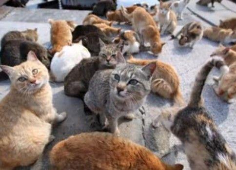 猫島 100匹のネコが暮らす島!島民はわずか15人の小さな島