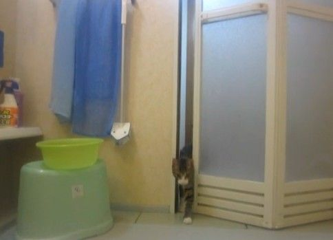 飼い猫に撮影拒否された